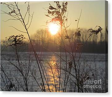March 2 2013 Sunrise Canvas Print by Tina M Wenger