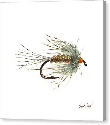 March Brown Spider Canvas Print by Sean Seal