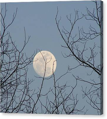 March Moon Canvas Print by Liz Vernand