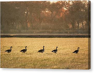March Of The Geese Canvas Print by Mary Lee Dereske