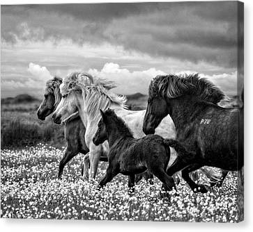 March Of The Mares Canvas Print by Joan Davis