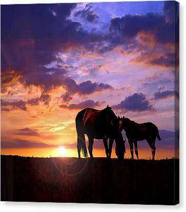 Mare And Foal Canvas Print by Rod Seel