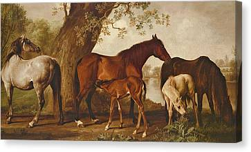 Bay Horse Canvas Print - Mare And Foals by George Stubbs