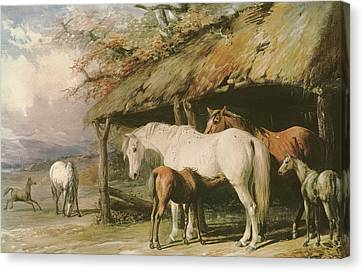 Mares And Foals Canvas Print by William Barraud
