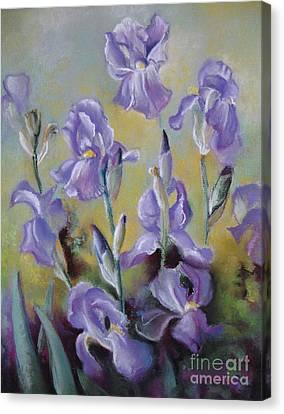 Maria's Irises Canvas Print