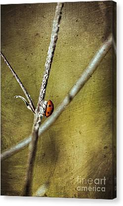 Marienkaefer - Ladybird Canvas Print