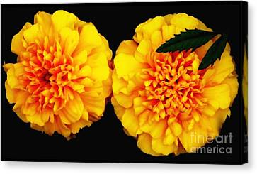 Canvas Print featuring the photograph Marigolds With Oil Painting Effect by Rose Santuci-Sofranko