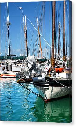 Marinas And Masts  Canvas Print