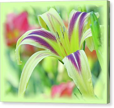 Marked Lily - Daylily Canvas Print