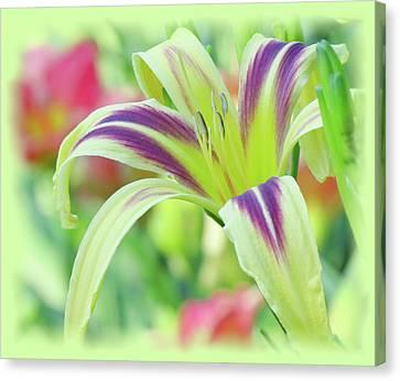 Marked Lily - Daylily Canvas Print