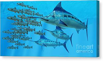 Marlin After A Fish School Canvas Print by Corey Ford