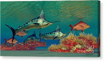 Marlin Reef Canvas Print by Corey Ford