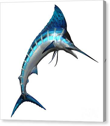 Marlin Side Profile Canvas Print by Corey Ford