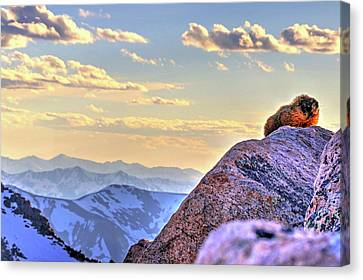 Fort Collins Canvas Print - Marmot At Sunset by Scott Mahon