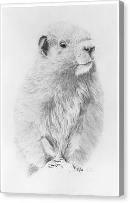 Marmot Canvas Print by Glen Frear