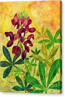 Maroon Bluebonnet Canvas Print