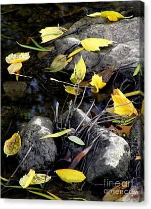 Fallen Leaf On Water Canvas Print - Marooned by Joe Jake Pratt