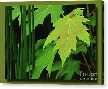 Canvas Print featuring the photograph Marsh Edge Greens by Deborah Johnson