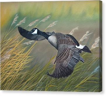 Marsh Goose Canvas Print