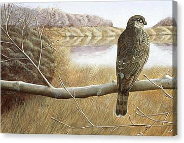 Canvas Print featuring the painting Marsh Hawk by Laurie Stewart
