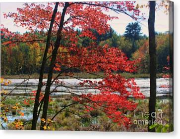 Canvas Print featuring the photograph Marsh In Autumn by Smilin Eyes  Treasures