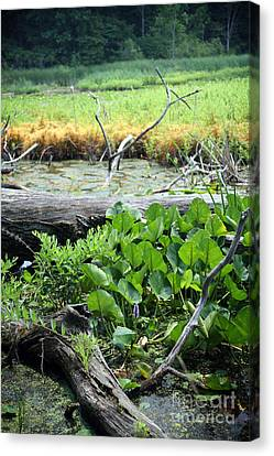 Marsh Canvas Print by Jeannie Burleson