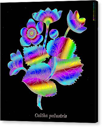 Fantastic Realism Visionary Art Mythology Canvas Print - Marsh Marigold by Eric Edelman