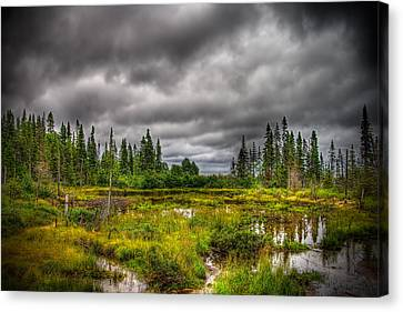 Marsh Near The Lake Canvas Print by Michel Filion