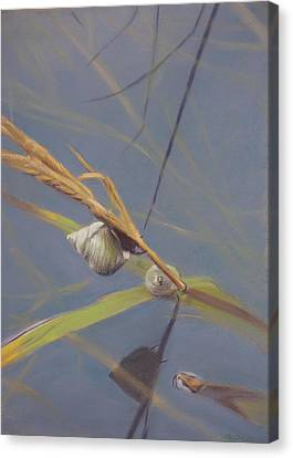 Marsh Snail Canvas Print by Christopher Reid
