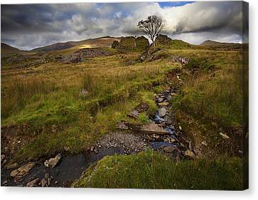 Canvas Print featuring the photograph Marshland At Rhyd Ddu, Wales by Richard Wiggins