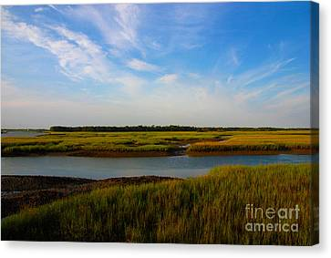 Marshland Charleston South Carolina Canvas Print