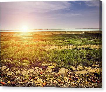 Marshland Canvas Print by Wim Lanclus