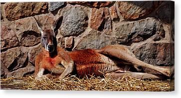 Marsupial Centerfold Canvas Print by Lori Tambakis