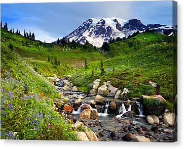 Martha Creek Wildflowers Canvas Print by Mike  Dawson