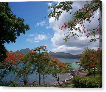 Canvas Print featuring the photograph Martinique by Mary-Lee Sanders