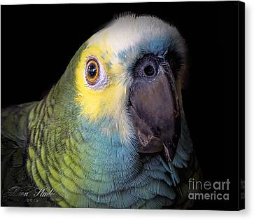 Marty The Blue Front Amazon Canvas Print by Melissa Messick