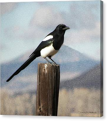 Marty The Magpie Canvas Print by Daniel Hebard