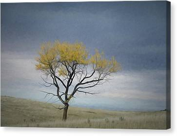 Martys Tree Canvas Print