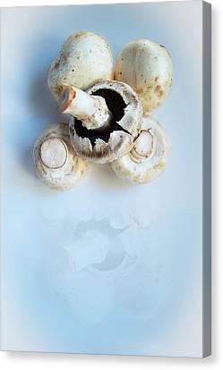 Marvellous Mushrooms Canvas Print