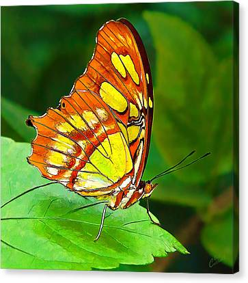 Abeautifulsky Canvas Print - Marvelous Malachite Butterfly by ABeautifulSky Photography by Bill Caldwell