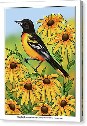 Maryland Canvas Print - Maryland State Bird Oriole And Daisy Flower by Crista Forest