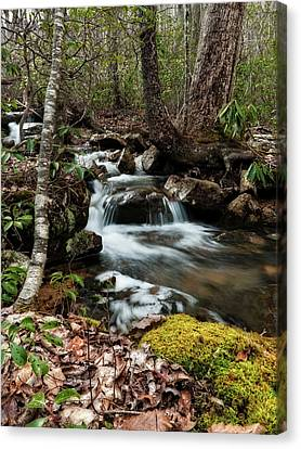 Canvas Print featuring the photograph Massanutten Spring 2 by Lara Ellis