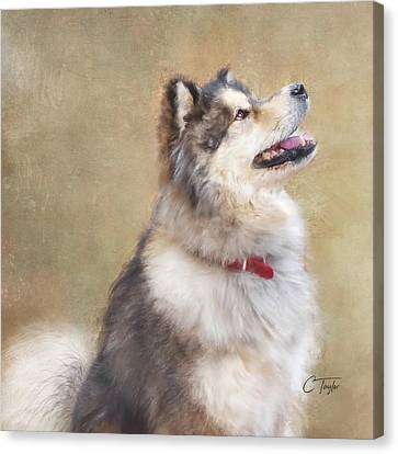 Malamute Canvas Print - Master Of The Domain II by Colleen Taylor