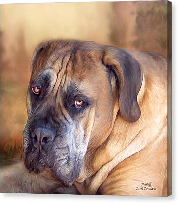 Mastiff Portrait Canvas Print by Carol Cavalaris