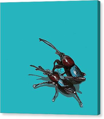 Mating Weevils Canvas Print