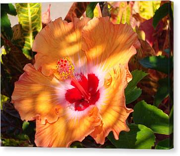 Canvas Print featuring the photograph Maui Hybiscus  by Tamara Bettencourt