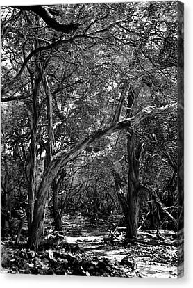 Canvas Print featuring the photograph Maui Trees by Art Shimamura