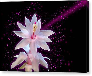 May Flower - Hit By Stars Canvas Print by Carlos Vieira