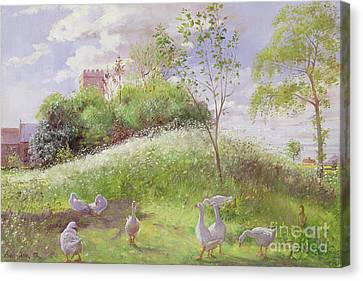 May Mount Canvas Print by Timothy Easton