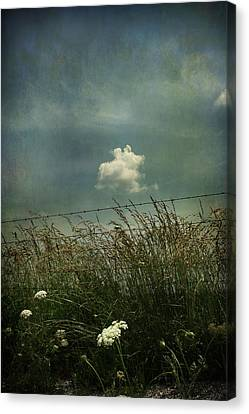 Maybe Someday I'll Float Above Canvas Print by Laurie Search